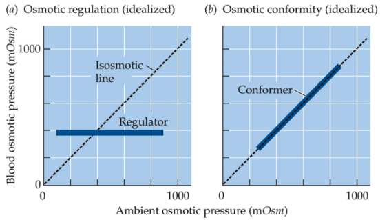 osmotic regulator