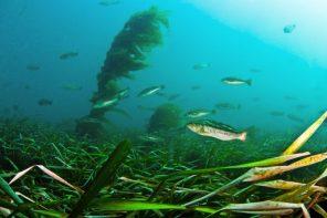 Image: NOAA Fisheries